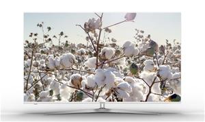 Hisense 55P1 55-inch 4K UHD Smart TV